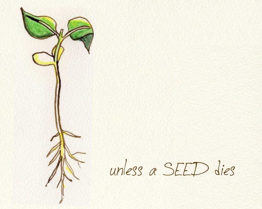 seed slide_week7